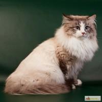 Фотограф для ваших домашних животных