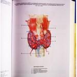 Новейшая энциклопедия очищения организма. Автор-составитель: П. Лисовский